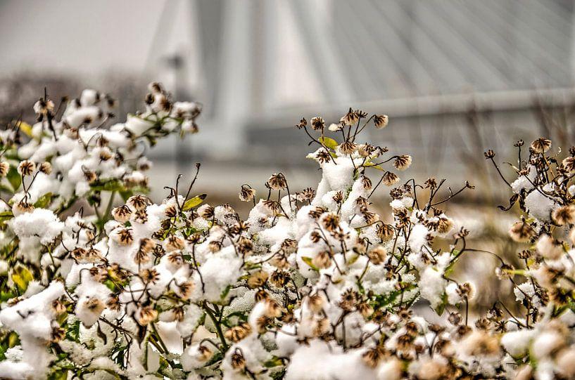 Winter bij de Erasmusbrug van Frans Blok