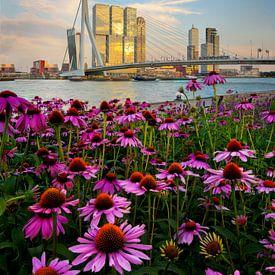 Erasmusbrug met in de voorgrond prachtige bloemen. van Jos Pannekoek