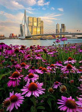 Skyline de Rotterdam avec des fleurs au premier plan. sur Jos Pannekoek