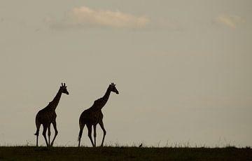 Giraffen silhouetten