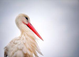 Portret van een ooievaar van Fotografie Egmond