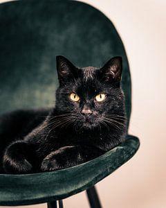 Zwarte kat op groene stoel van Sander Spreeuwenberg