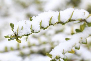 sneeuw op de blaadjes von nele huyck