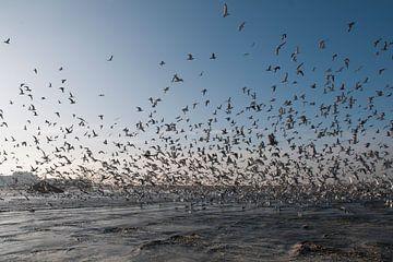 Seagulls in Scheveningen - The Netherlands von Tamara Witjes