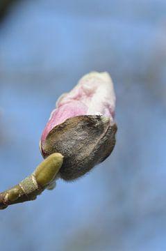 roze bloem aan boom van Jeffry Clemens