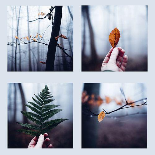 Wald Quartett 022 van Oliver Henze