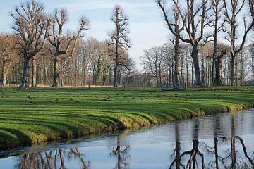 Landgoed Marquette spiegeling bomen van