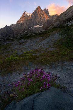 Zonsopkomst in nationaal park de Écrins in de Franse Alpen met paarse bloemen in de voorgrond. van Jos Pannekoek