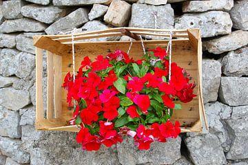 Bloemen houten kist muur, Alberobello, Apulië van Inge Hogenbijl