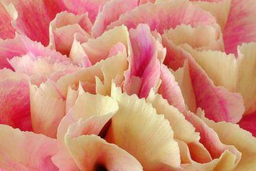 Close up roze anjer van Natascha Teubl