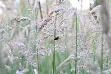 Lieveheersbeestje van Michel Zwart