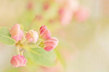 Fröhliche rosa Knöpfe von Roosmarijn Bruijns