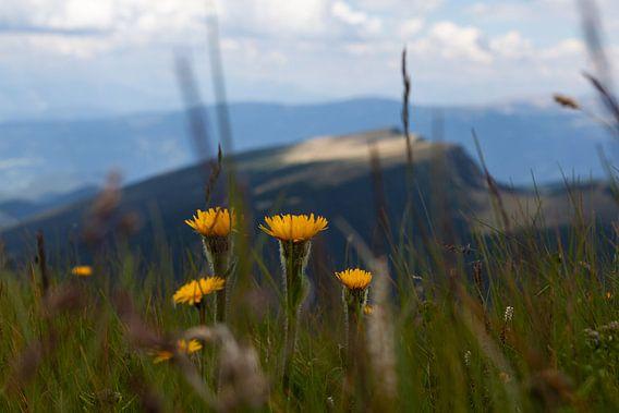 Wilde bloemen pracht
