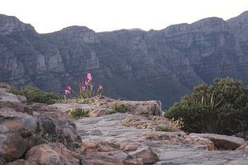 Bloemen op een berg van Quinta Dijk