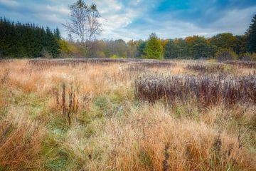 Herfst in het bos in de vroege ochtend van eric van der eijk