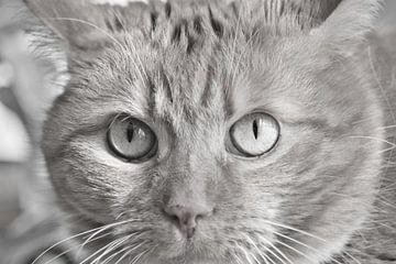 Close up van vragende katten ogen van J..M de Jong-Jansen