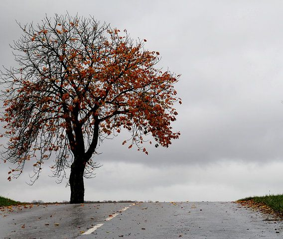 kastanje boom van marleen brauers