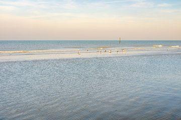 Meeuwen op het strand van Johan Vanbockryck