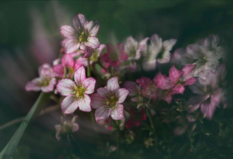 Bloemen van Yvette Bauwens