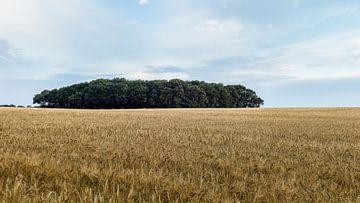 Getreidefeld von Drenthe von Timo Bergenhenegouwen