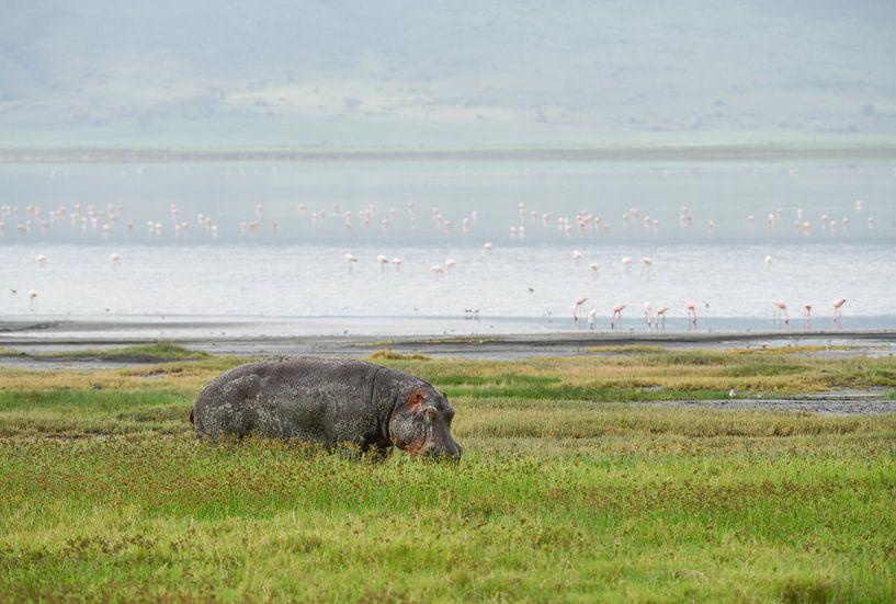 nijlpaarden van Robert Styppa