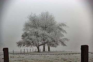 Bomen in een winterlandschap van Wilma Overwijn