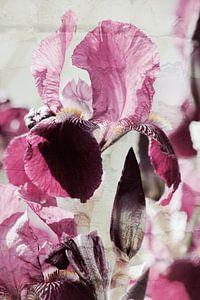 Iris in Love van ines meyer