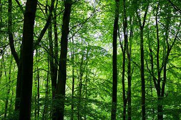 Früh am Morgen, wenn der Wald erwacht, ist die Natur magisch. von Rutmer Visser