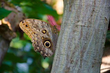 Vlinder van Gergana Kirovska