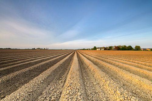 Vers geploegd aardappelveld met rechte aardappelruggen