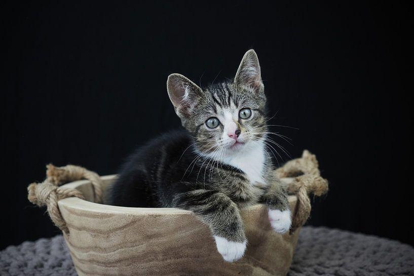 Kitten in einem Holztrog von Astrid Brouwers