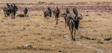 Traces d'Afrique sur Joris Pannemans - Loris Photography