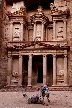 Kamelen in Petra, Jordanië van Marvin de Kievit
