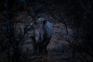 Spion in het duister van Joris Pannemans - Loris Photography