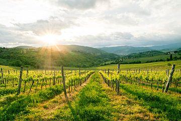 Wunderschönes Landschaftsfoto eines Weinbergs in der Toskana von Natascha Teubl