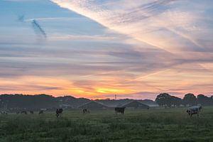 Koeien van Ilma Meijer