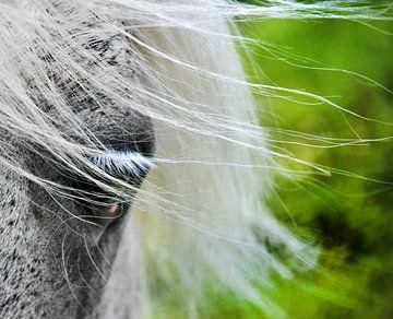 Het oog en de wind von Harrie Muis