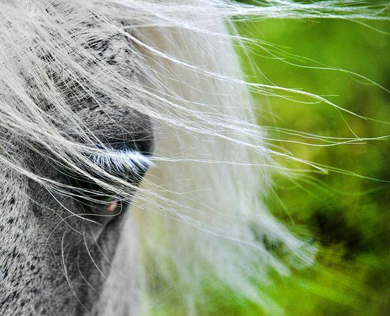 Het oog en de wind