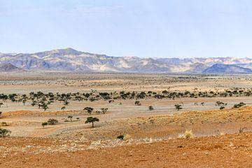 Savanne in Namibië