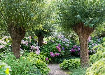 tuin met knotwilgen en hortensia van Compuinfoto .