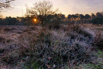 Winterse zon van Joran Quinten