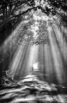 Sonnenschein im Wald von René van der Horst