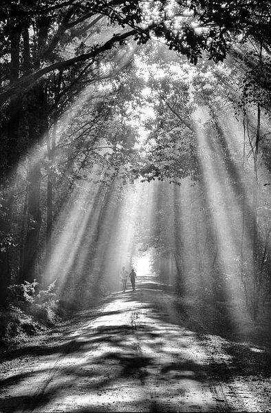 Zonnestralen in het bos van René van der Horst