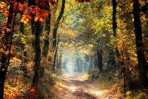 herfst in al zijn kleuren van