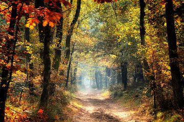 herfst in al zijn kleuren van Rigo Meens