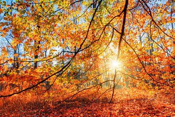 Herfstkleuren in het bos von Dennis van de Water