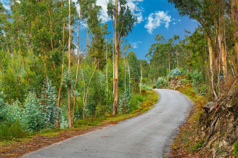 Verlassene kurvenreiche Straße im Norden Portugals von Ivo de Rooij
