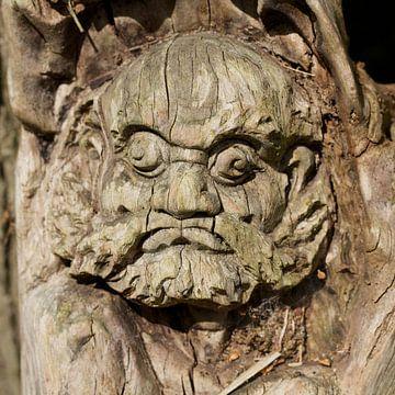 Gezicht in een boom sur Berthilde van der Leij