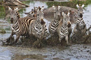 zebraspektakel van anja voorn