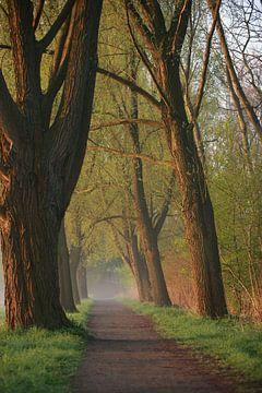 Weg zwischen Bäumen von Jana Behr